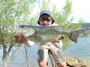 Black bass con jerkbait
