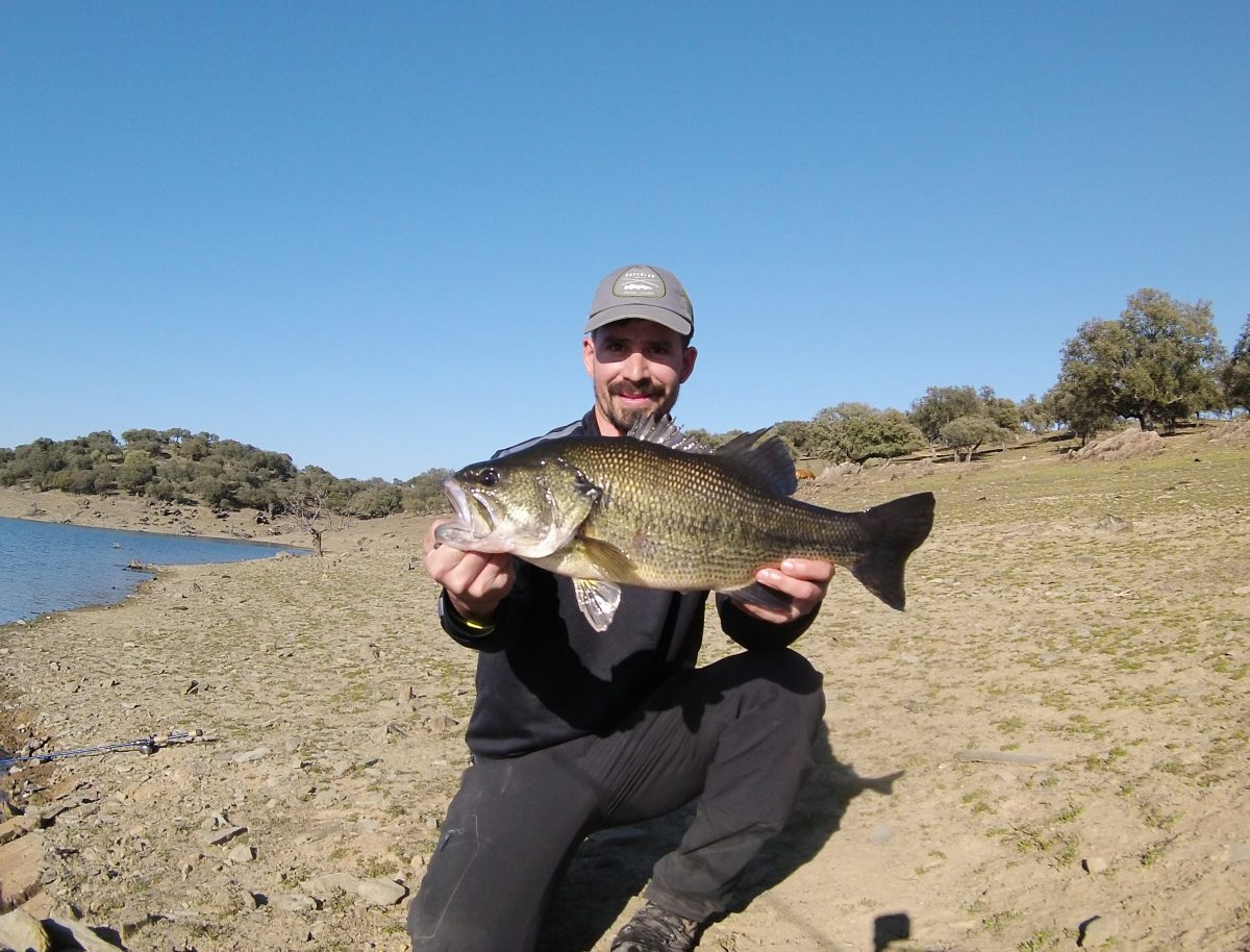 Black bass Sierra Brava